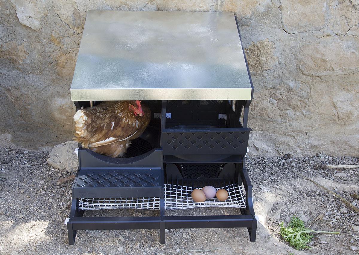 ponedor gallinas Llardecans