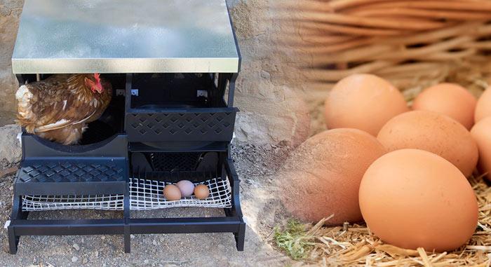 ponedero de gallinas con una cesta de huevos frescos