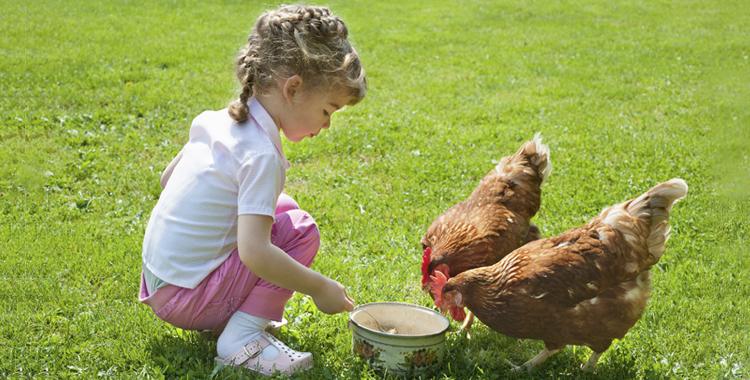 Niña dando de comer a una gallina